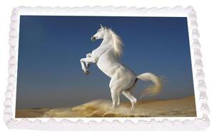 Häst 13
