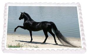 Häst 14