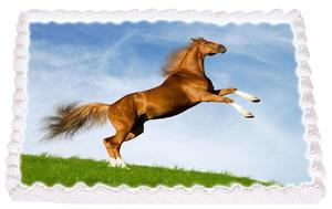 Häst 4