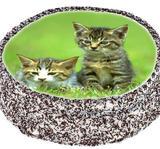Cat 3