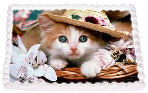 Katt  5